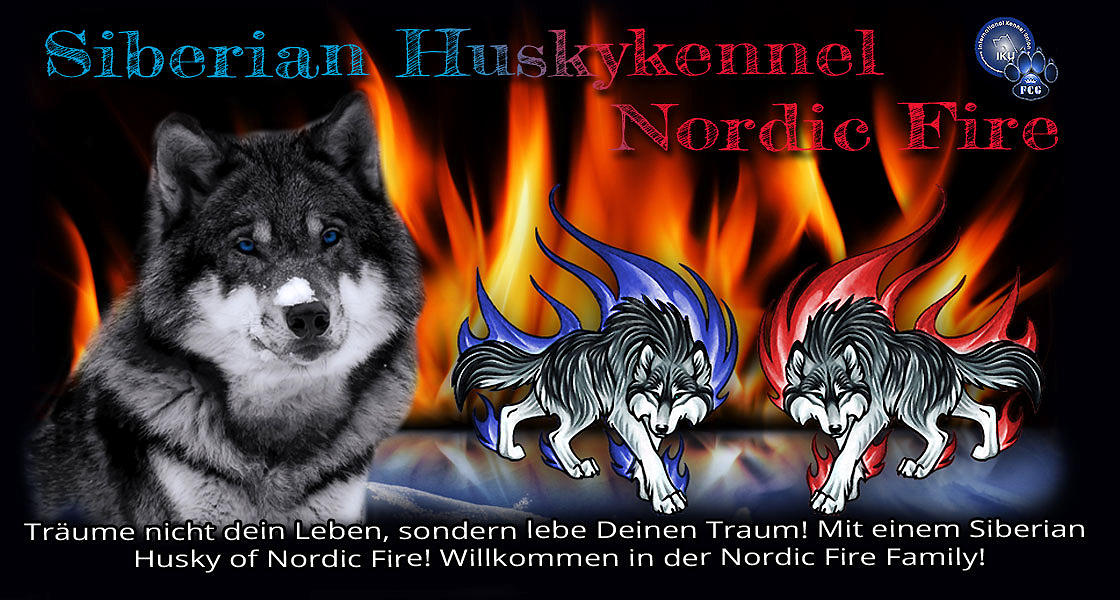 Siberian Huskys of Nordic Fire